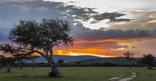 Y1A1683 Olarro, Kenya   by Ninara