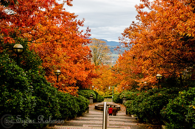 Fall Colors Deer Lake Park, Burnaby, BC