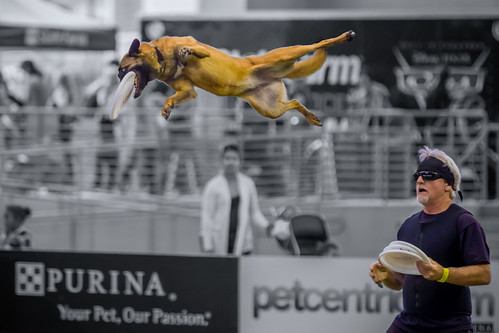 Amazing High Flying Dog | by TC Morgan