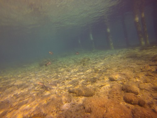 dock dive scuba bonaire photostream calabasreef