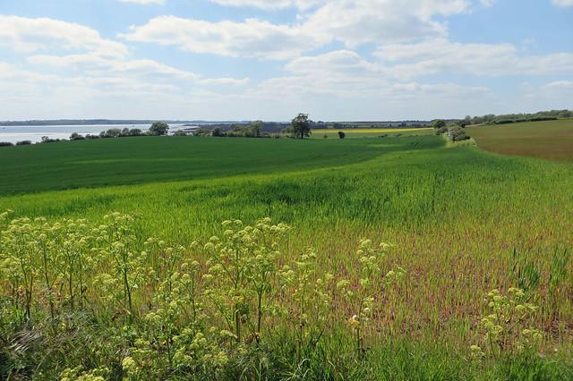 Shotley peninsula