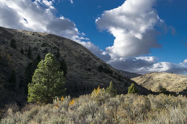 October in East Fork Mink Creek, SE Idaho
