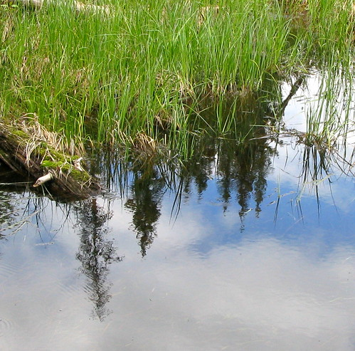 blue forest green laclahache lake grass reflection cariboo wetland tree trees
