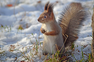 - Who ate all my nuts??? | by L.Lahtinen (nature photography)