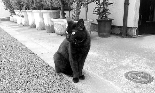 黒ぬこさま