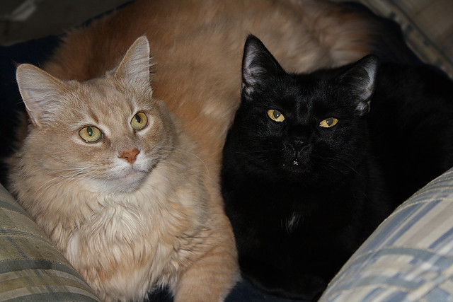 Brother's ~ Champaz And Blacky..