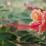 Fr, 24.04.15 - 16:47 - Botanischer Garten Medellin