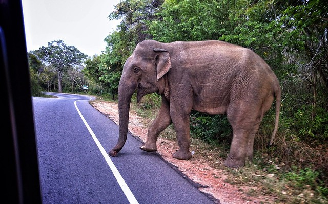 Screeech!! Went the car as the elephant started to cross in front of us. #BBCMonsoon