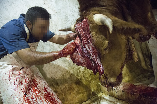 JALslaughterhouse | by Animal Equality International