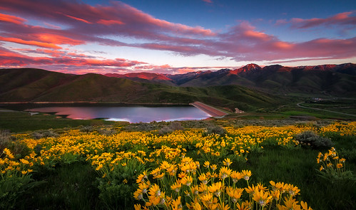 East Canyon Wildflower Sunset - Utah Landscape Photography | by clint losee