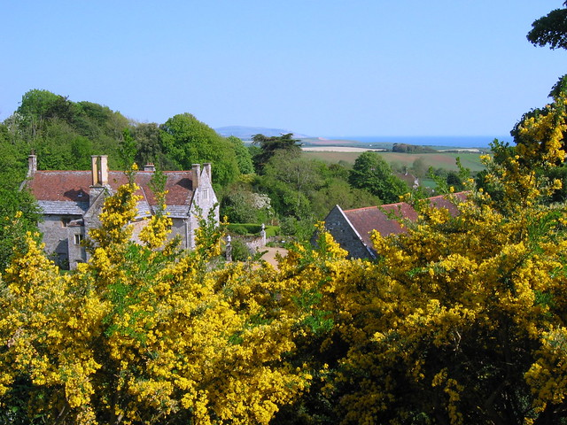 Mottistone Manor Gardens 005