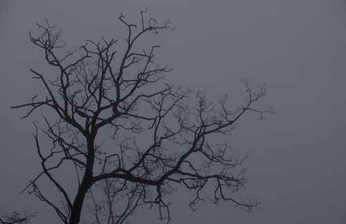 Foggy Craggy Tree | by Justin Dolske