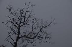 Foggy Craggy Tree