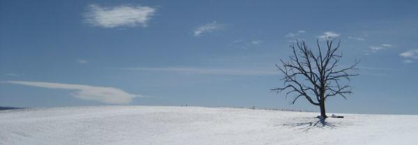 Snowy day at Sinkland Farms, Christiansburg, Virginia