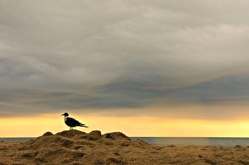 morning light summer vacation bird rain clouds nc sand seagull sony kurebeach beachscape nex flipmode79 nex5n