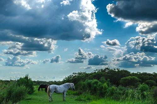 horses clouds florida wildlife gainesville paynesprairie