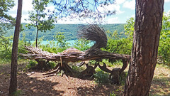 Sculptures dans le sentier de Maisod