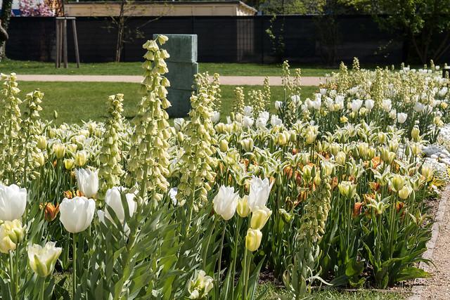 Bundesgartenschau 2015, Brandenburg a. d. Havel - Packhofgelände mit den Themengärten: Weiße Tulpen und weiße Persische Fritillarien