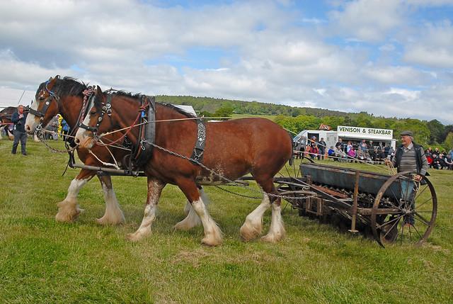 Working Horses 015 - FVAMC Rally 2015