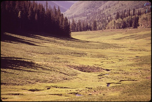 trees mountain nature landscape photography colorado unitedstates meadow nationalforest alpine uncompahgre environmentalprotectionagency documerica usnationalarchives boydnorton nara:arcid=544892