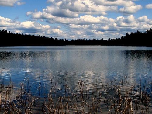 blue cloud lake reflection reed weeds wetland cariboo laclahache bearpawlake