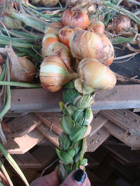 Braiding Onions