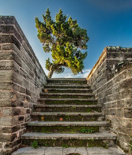 tree digital sunrise ruins florida newsmyrnabeach historicsite archeologicalsite oldfortpark canonef1740mmf4l canon5dmkii topazadjust5