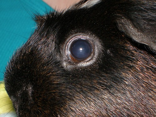 Peek lft eye #2 7.30.15 | by grannyju1