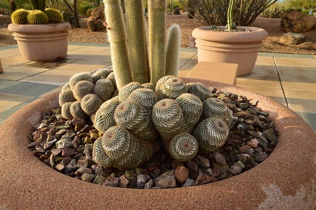 Cactus Garden 77