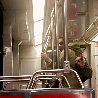 Suspicious Dude Carrying His Cute Dog in a Backpack on Muni | by Lynn Friedman