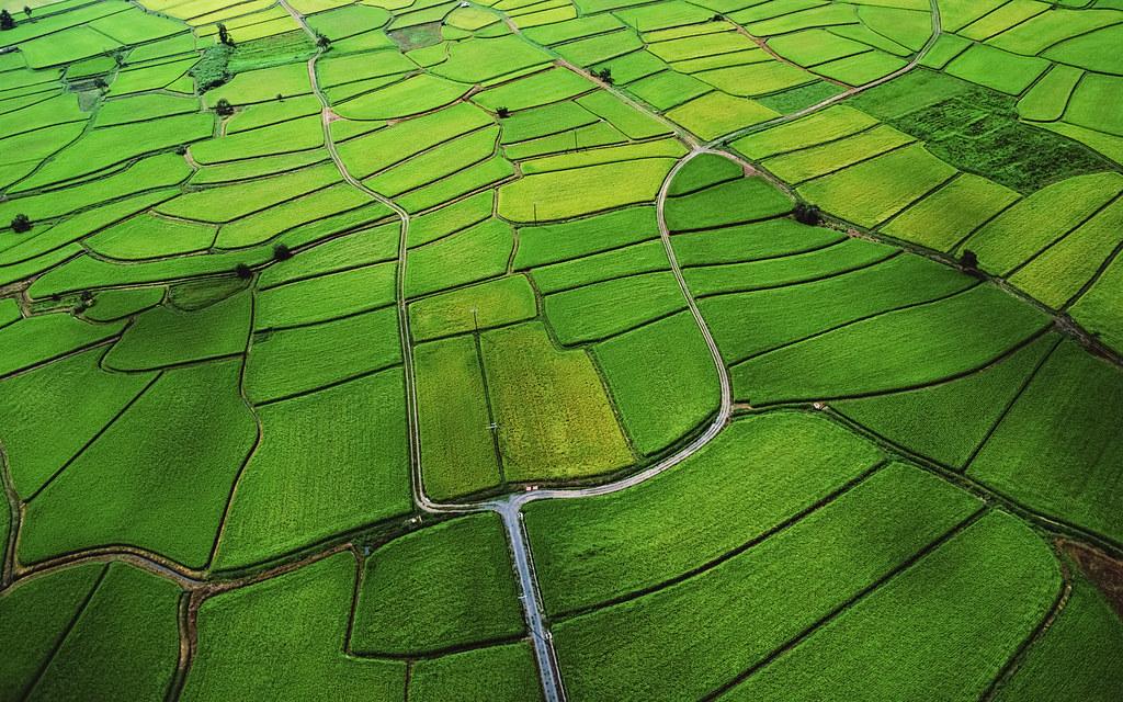 Rice Paddy Os X Mountain Lion New Desktop Wallpaper Halil