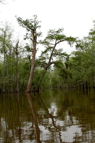 nature louisiana unitedstatesofamerica swamp activities 840 westpearlriver unitedstatesofamericausa honeyislandswamptour neworleansgraduation2013 41490crawfordlandingrd 41490crawfordlandingrdslidellla slidellla70461