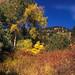 Fall colors near Chautauqua trailhead.