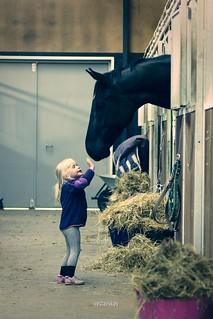 Hi Horse!