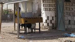 Djibouti 2013 - Obock - Baby foot
