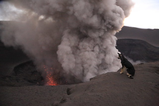 Dog at Crater Rim Two Vents Yasur Volcano Twilight Eruption Tanna Island Vanuatu