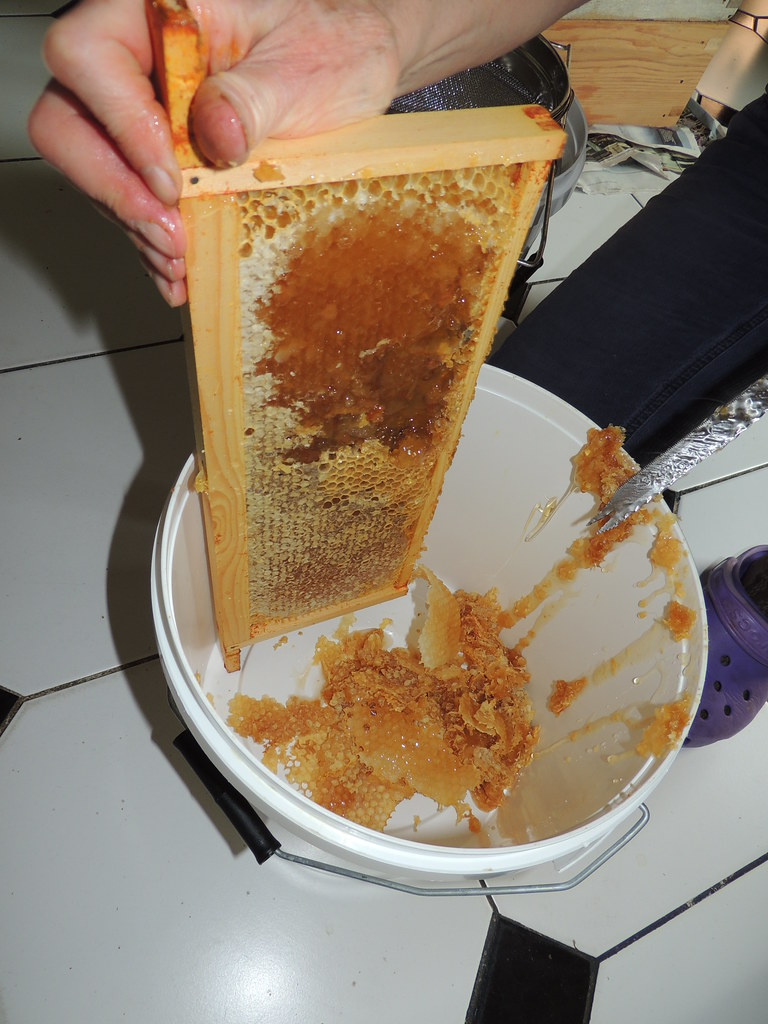 Honey Extraction De Capping Sealed Comb Quisnovus Flickr