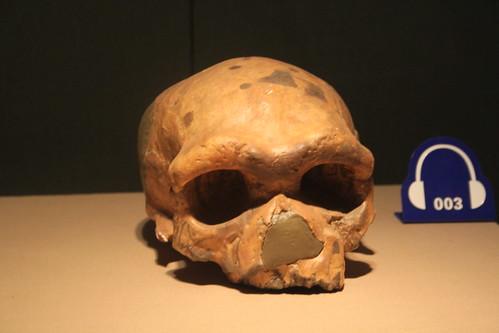 Dali Man Skull, Replica
