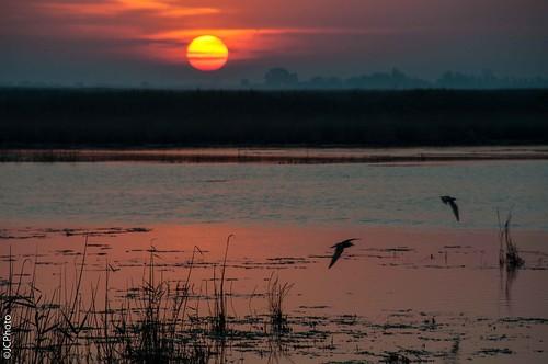 Amanece en el delta del Ebro#5