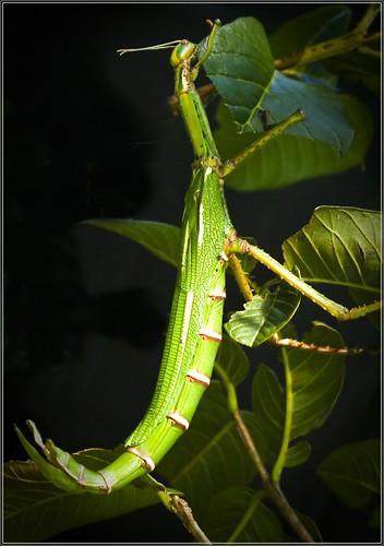 photoshoot mtcotton juliecherylpeterthornesidesunrisepraying mantisgrassesw