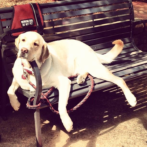 Working dog on break
