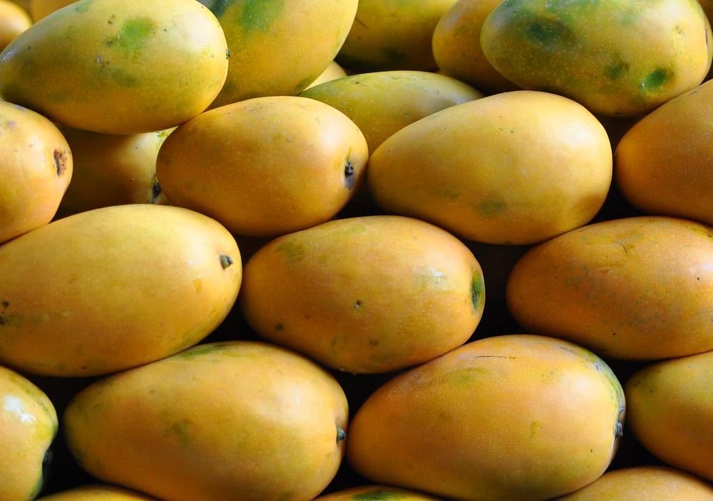 Banganapalli Or Benishaan Variety of Indian mangoes | Flickr