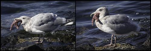 Gulls + Sea Stars   by Ingrid Valda Taylar