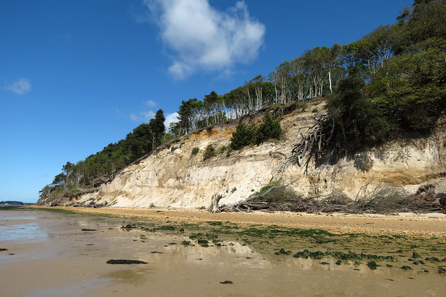 Beach on Brownsea Island