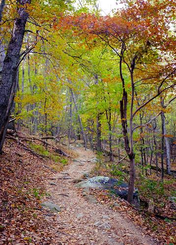 x100s autumn naturaleza trail foliage path trees nature hiking fuji outdoors view sugarloaf fall fujifilm mountain dickerson maryland unitedstates us