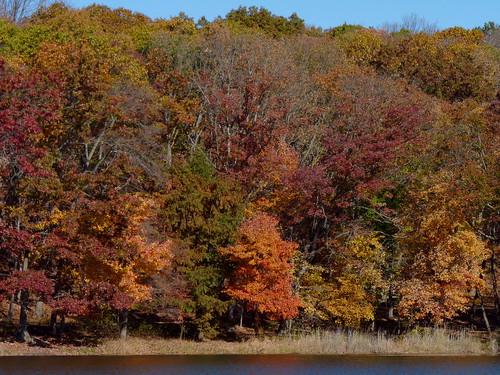 trees forest lake foliage landscape autumn hookscreeklake cheesequakestatepark middlesexcounty nj newjersey fav10