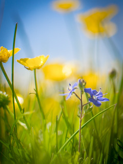 Meadow Flower Tilt-shift   by dave.tay1or