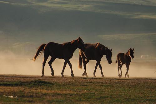 Atlar-2 | by yyildizkan