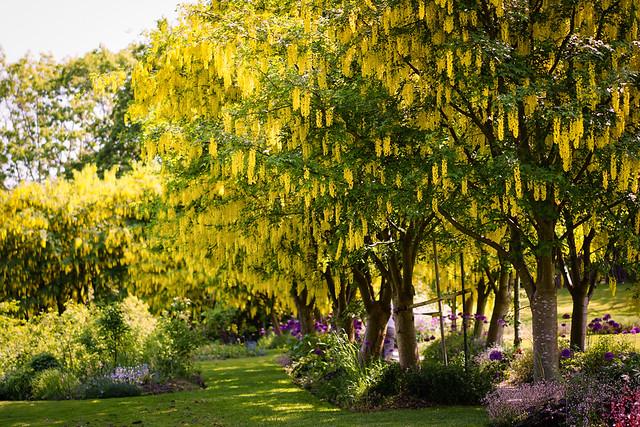 Golden Forest at VanDusen Botanical Garden in Vancouver