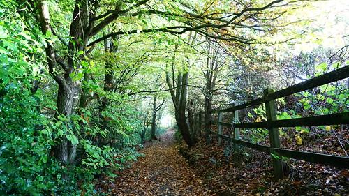 Top Path, Tree Tunnel | by Mark Buchan Jones